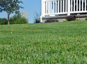 e green lawn maintained by our team